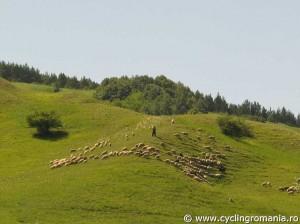 Rural-landscape