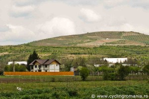The-wine-hills-of-Dealu-Mare