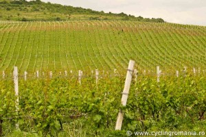 Wine-hills-at-Dealu-Mare