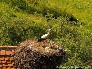 06-Storck-nest